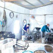 công nhân sản xuất chiếu hạt nâu phổ mến thái bình